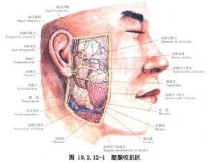 化膿 性 耳 下 腺 炎
